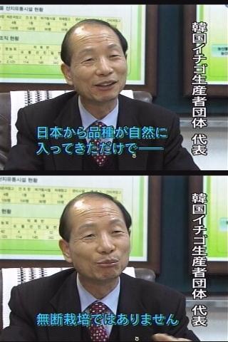 韓国に流出した日本品種のイチゴ・・・韓国での売り上げ年間700億円! 日本に逆輸入される事態に